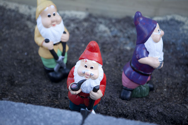 Cute little garden gnomes