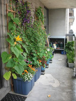 If you're looking to grow larger plants, these self-irrigating planters made from plastic tubs are a great idea.