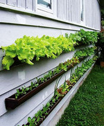 Gutters easily mount to a wall or balcony railing for plants that don't have deep roots.