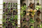 Grow a compact, vertical veggie garden