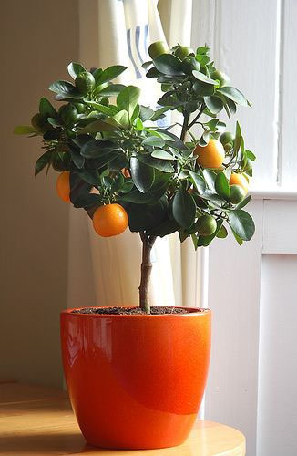 If you don't have much space at all, try a citrus tree for a rewarding plant which smells great!