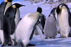 Clumsy Penguin Compilation