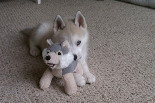 Just chewing on his friend