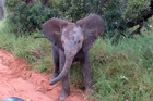 Baby Elephant Tries to Intimidate a Group of Safari Tourists