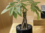 If your finances are looking worse for wear, you could add a money tree to your lounge. The best money trees are Crassula Ovata and Pachira Aquatica. However, adding any plant with lush leaves in an area of sunlight can work too.