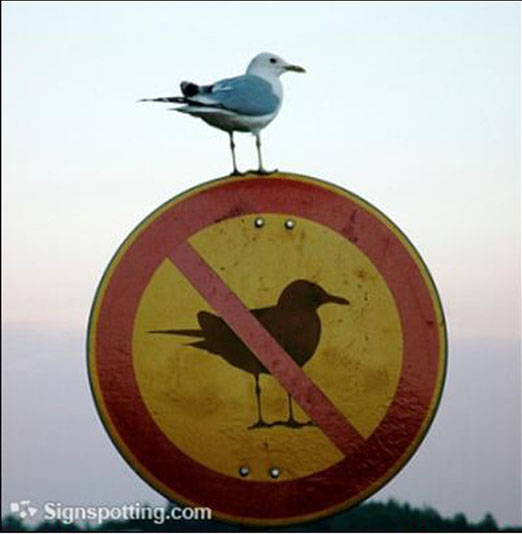 That is one defiant seagull!