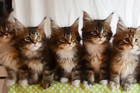Naww! Testing The Reflexes Of Kittens Is Adorable!