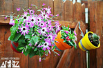 Hang colourful flowers in bright pots of all shapes and sizes and hang them from your fence