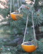 More orangey goodness for the birds!