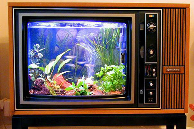 Old school TV turned into a fish tank!