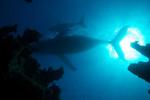 Atlantic : Wildest Ocean On Earth