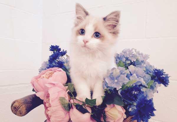 Kitten: Adventures!